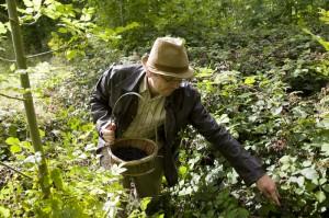 Andy Hamilton foraging for urban wild food blackberries