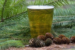 Spruce beer with little cones in front