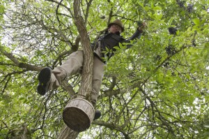 Andy Hamilton the Urban forager up an elder tree, foraging by Roy Hunt