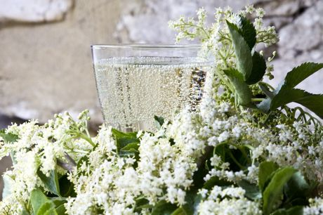 Elderflower champagne in a glass