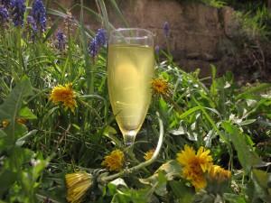Dandelion champagne
