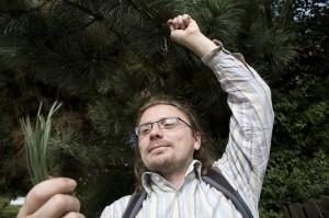 Andy Hamilton picking pine needles